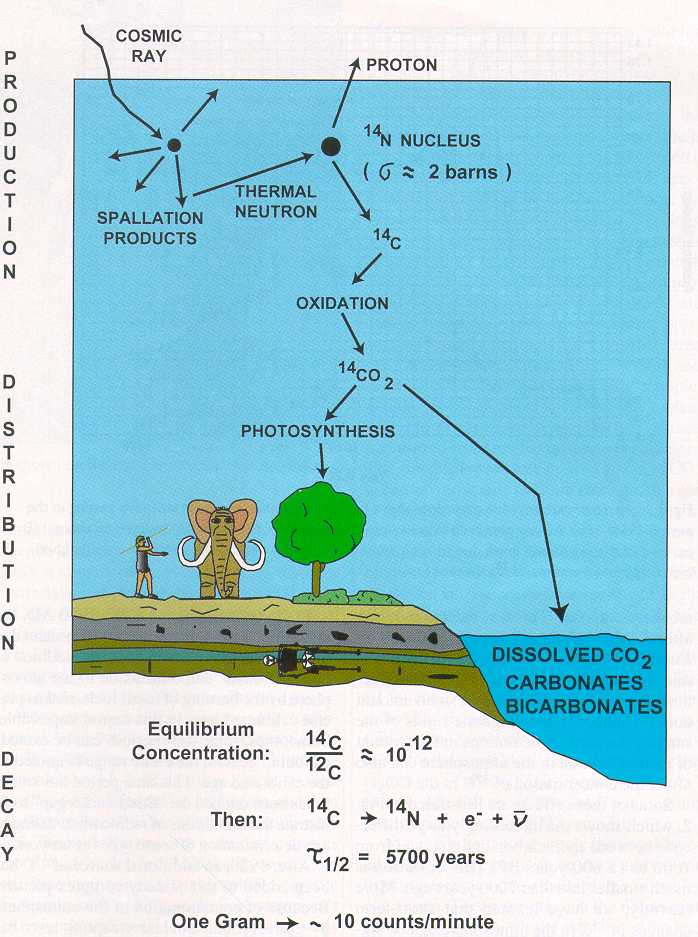 carbon dating svenska 1 physics (chapter 2): carbon dating: (how) does it work the cassiopeia project is an effort to.
